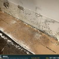 Mold Testing | Mold Testing Rockville