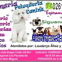 Veterinaria Peluquería Canina Tienda para Mascotas