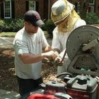 Bee Removal| Pest Control Co- |Fumigation